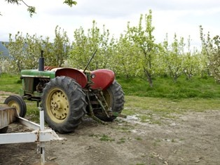 Almond Orchard with Tractor