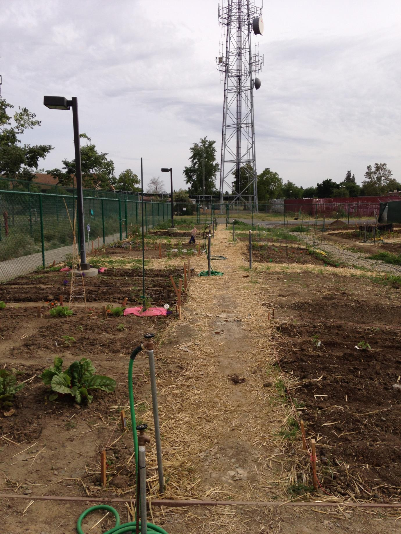 beginning of community garden