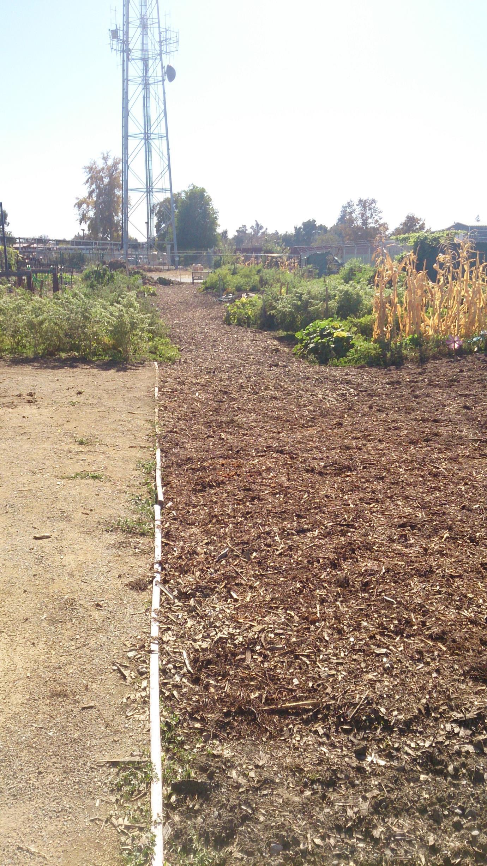 Hanna & Herbert Bauer Memorial Community Garden | Yolo County