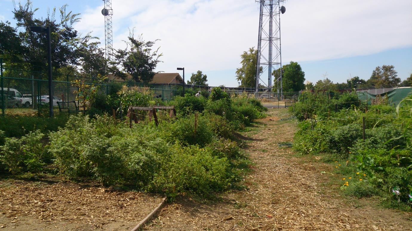 hanna u0026 herbert bauer memorial community garden yolo county