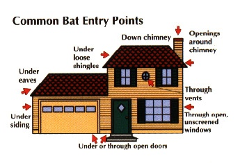 Bat Entry Points Into Your Home