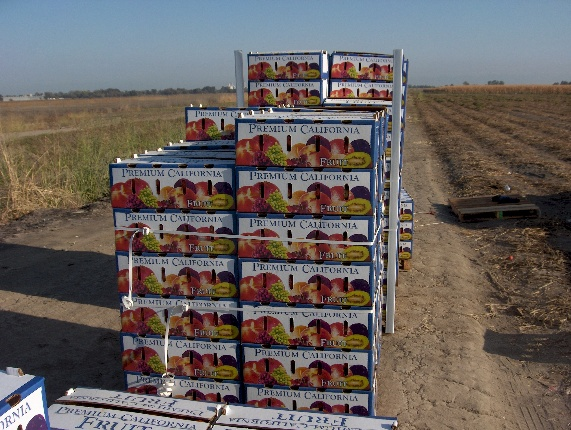 Boxes of tomatoes stacked in a field