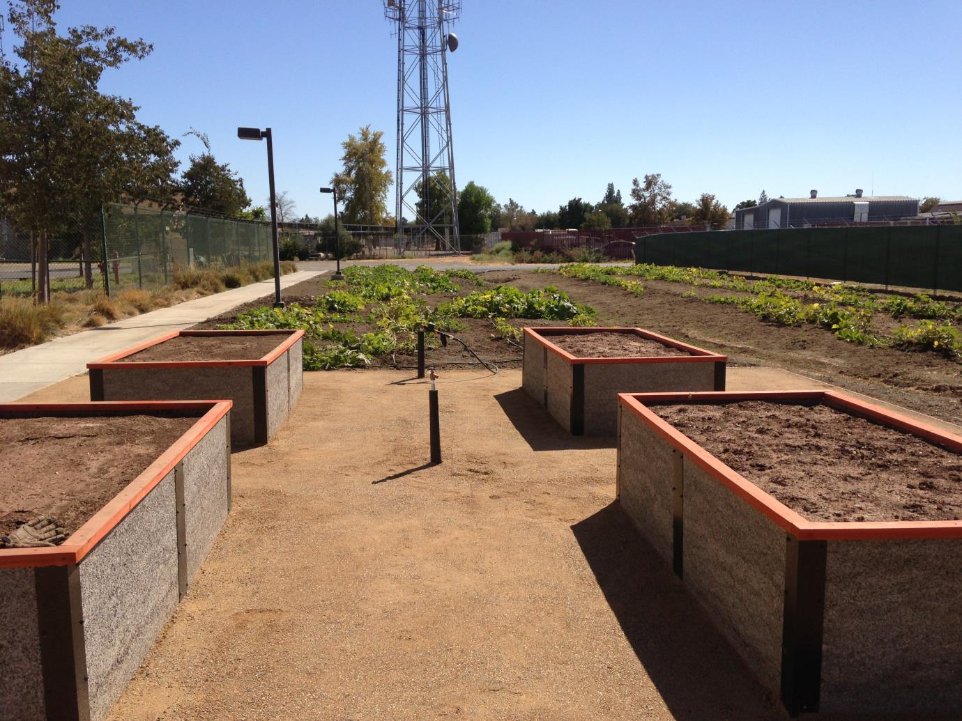 ADA beds and pumpkins